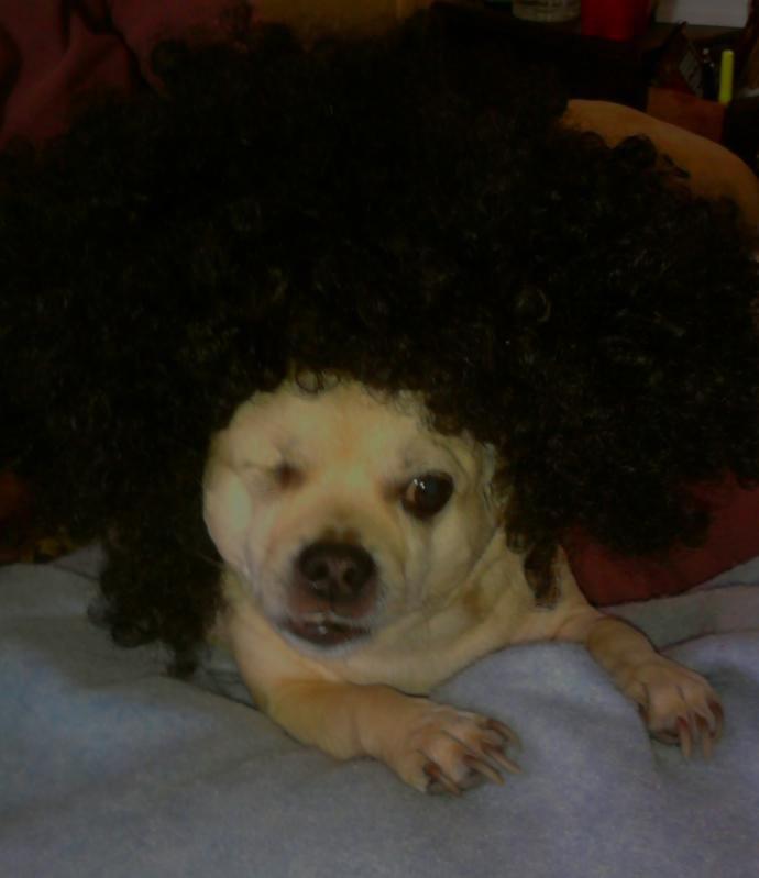 Adiós Chihuahua Ojo