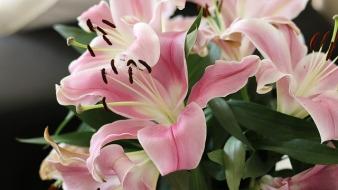 flowers-2067604_640